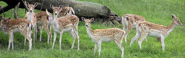 Deer in Avon Valley Wild Life Park